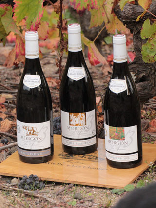 Wines of the Domaine Gérard Brisson