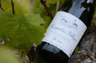 Bouteille de Beaujolais Villages sur un pied de vigne