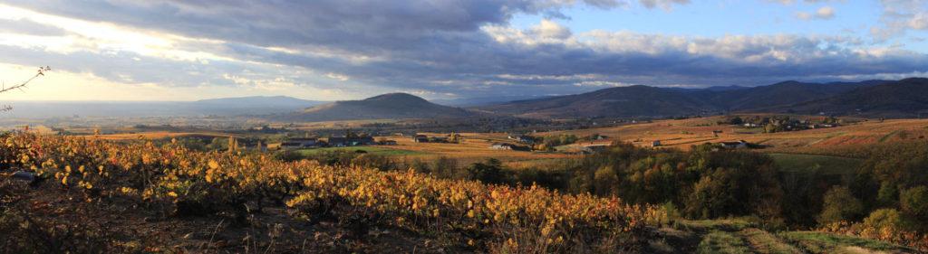 Panorama sur les vignes du Beaujolais